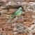 tipik · taş · Bina · hayvan · barınak · manzara - stok fotoğraf © prill