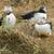 трава · завода · животного · Открытый · природного · Исландия - Сток-фото © prill