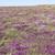 colorido · vegetación · detalle · alrededor · paisaje · verano - foto stock © prill