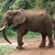 afrikai · bokor · elefánt · nyáj · elefántok · szavanna - stock fotó © prill