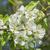 gyümölcsfa · tavasz · idő · idilli · napos · díszlet - stock fotó © prill