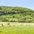 rural springtime scenery stock photo © prill
