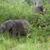 Afrika · filler · yeşil · çalı · oyun - stok fotoğraf © prill