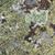 kő · felület · moha · full · frame · természetes · mutat - stock fotó © prill