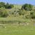 のどかな · ツリー · 風景 · 山 · 農業 - ストックフォト © prill