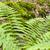 fresh green fern leaves stock photo © prill