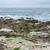 декораций · отдел · пляж · дома · здании - Сток-фото © prill