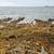 gulf of morbihan stock photo © prill