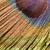 tavuskuşu · tüy · detay · renkli · yalıtılmış · beyaz - stok fotoğraf © prill