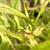 görüntü · küçük · böcek · saç · yeşil · kırmızı - stok fotoğraf © prill