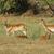 rebanho · savana · África · safári · serengeti · Tanzânia - foto stock © prill