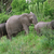 elephant family in green vegetation stock photo © prill