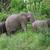 afrikaanse · olifant · familie · afrikaanse · olifanten · olifant · park - stockfoto © prill