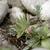 ジューシーな · クローズアップ · マクロ · 新鮮な · ジューシー · ショット - ストックフォト © prill