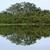 waterside view of the lake victoria near entebbe stock photo © prill