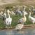 nagyszerű · fehér · Uganda · díszlet · madarak · Afrika - stock fotó © prill