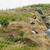 рок · каменные · животного · Открытый · природного · Исландия - Сток-фото © prill