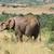 африканских · Буш · слон · Слоны · саванна - Сток-фото © prill