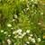 alan · çayır · bahar · beyaz · papatyalar - stok fotoğraf © pruser