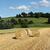 paca · paja · pequeño · colina · alimentos · hierba - foto stock © pterwort