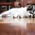 sevimli · beyaz · köpek · yavrusu · köpek · uyku - stok fotoğraf © punsayaporn