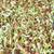 zonnebloem · zaden · spruit · organisch · boerderij · voorraad - stockfoto © punsayaporn