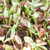 girassol · plântula · semente · isolado · branco · cópia · espaço - foto stock © punsayaporn