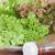 成長 · パプリカ · キュウリ · 温室 · 農業 · 業界 - ストックフォト © punsayaporn
