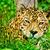 猫 · 行動 · キラー · 本能 · 国内の · 猫科の - ストックフォト © pxhidalgo