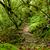 tropical · caminho · selva · Equador · madeira - foto stock © pxhidalgo