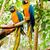 żółty · niebieski · drzewo · ptaków · tropikalnych · zwierząt - zdjęcia stock © pxhidalgo