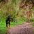 cão · de · caça · floresta · morto · animal · de · estimação · caça - foto stock © pxhidalgo