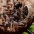 vespa · nido · vuota · sfondo · costruzione - foto d'archivio © pxhidalgo