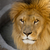 retrato · belo · masculino · parque · animais · selvagens · reserva - foto stock © pxhidalgo