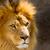 сторона · профиль · большой · мужчины · лев · высокий - Сток-фото © pxhidalgo