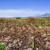 сахарного · тростника · урожай · тропические · Квинсленд · Австралия · работу - Сток-фото © pxhidalgo
