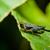 グラスホッパー · 緑色の葉 · 草 · 自然 · 夏 · 脚 - ストックフォト © pxhidalgo