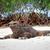 galapagos iguana on the beach stock photo © pxhidalgo