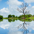 landscape with trees reflecting in the water stock photo © pxhidalgo