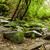 tropical · floresta · paisagem · Equador · natureza · luz - foto stock © pxhidalgo