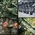 армии · военных · место · набор · американский - Сток-фото © pxhidalgo