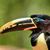 the toucan resting by a tree close up stock photo © pxhidalgo