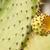 ecuador galapagos old endemic giant cactus tree stock photo © pxhidalgo