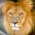мужчины · лев · парка · Танзания · Африка - Сток-фото © pxhidalgo
