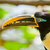 the toucan resting with nature background stock photo © pxhidalgo