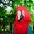 red macaw head close up stock photo © pxhidalgo