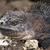 イグアナ · 肖像 · マクロ · ショット · 頭 · 森林 - ストックフォト © pxhidalgo