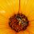 Biene · Blume · Blumen · Hintergrund · Sommer - stock foto © pzaxe