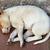 street homeless mongrel puppy stock photo © pzaxe