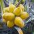 monte · jovem · Tailândia · textura · fruto - foto stock © pzaxe